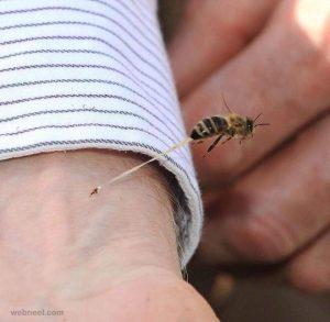 Bienenstich