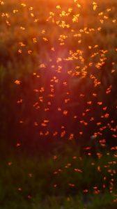 Mücken im Schwarm