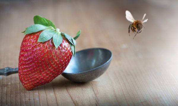 Biene im Essen